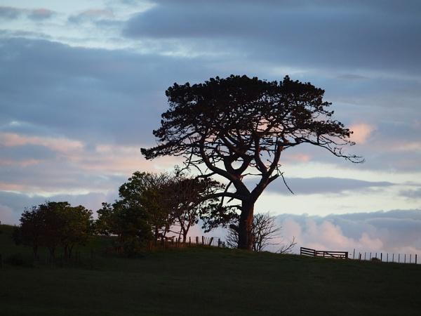 Tree At Dusk by chensuriashi