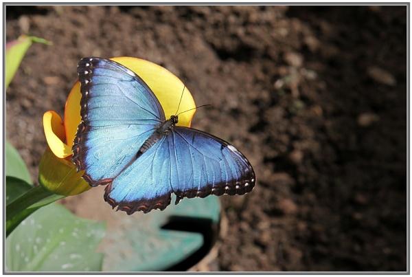Big Blue by jackitec