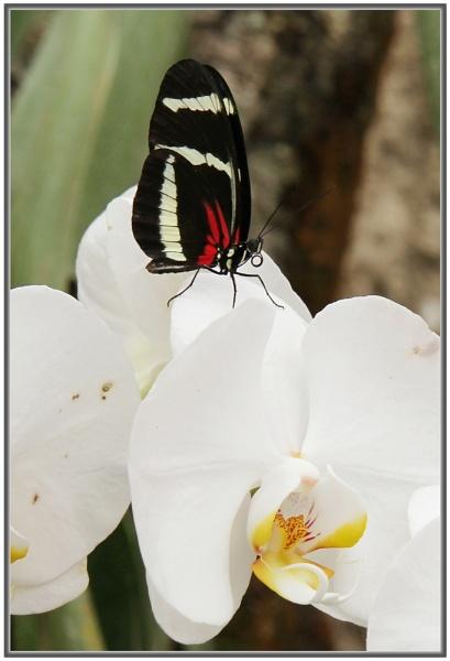 Black on White by jackitec