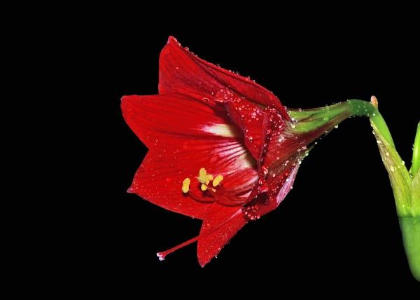 Red by samarmishra