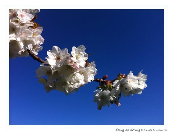 Spring Is Sprung! by GarrathE