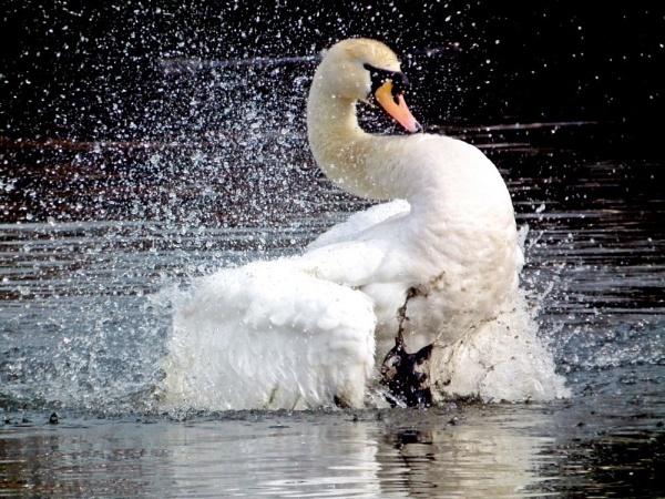 Splashing Around by simon73