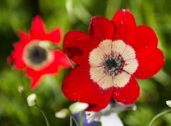 Red Flower by mrpjspencer