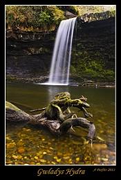 gwladys falls hydra