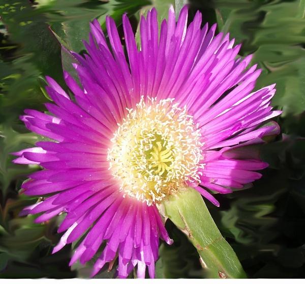 Lilac by manjoy
