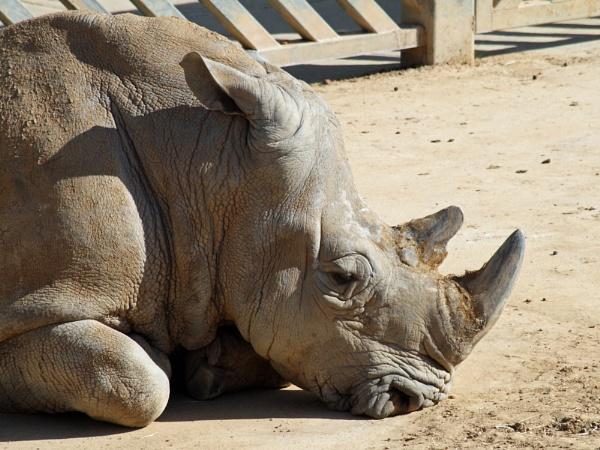 Rhino by nbatchford