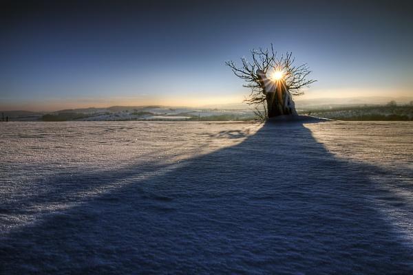 Cesta ku stromu života by biker11