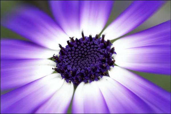 Purple by dwilkin