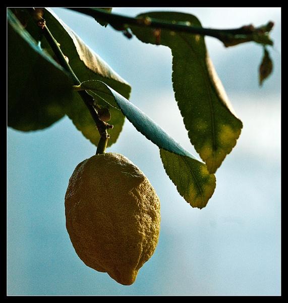 Lemon by Scutter