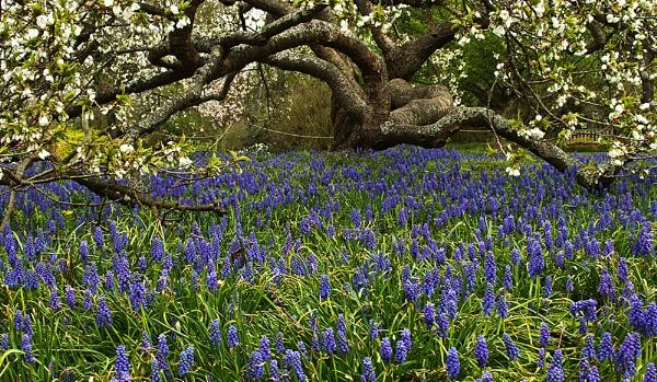 Wisley Cherry & Blue Flowers