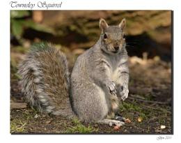 Towneley Squirrel