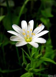 Flower + Bug