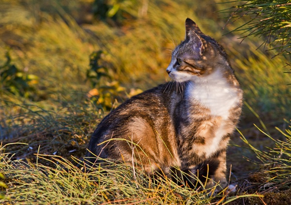 Morning prowl by crazyshutter
