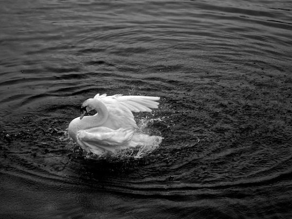 Splish Splash.... by Carrera_c