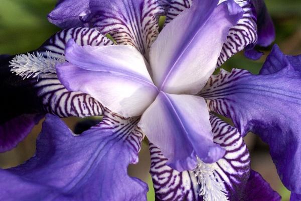 The colour purple by Tezz450D