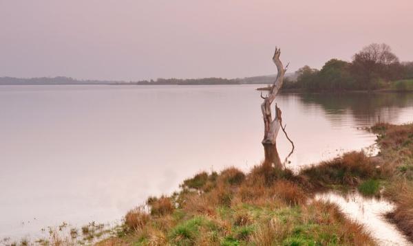 Dead tree at sunset by Gavin_Duxbury