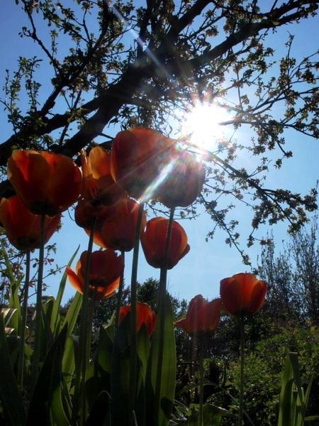Spring Garden by jessikerr