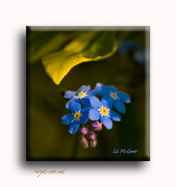 Forgotten by LizMutimer