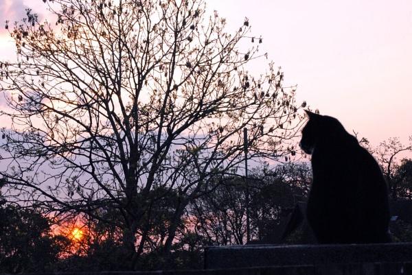 Early sunrise by suekib