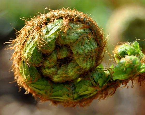 fern by MHart