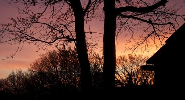 Sunrise in the garden by marktc