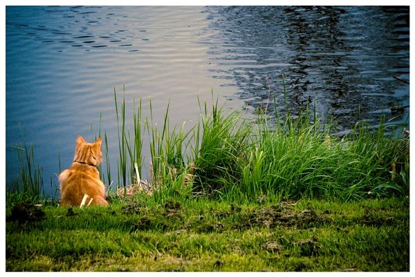 Gone Fishing... by havecamerawilltravel