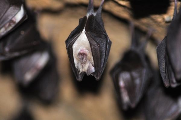 Batman ;-) by mstuber