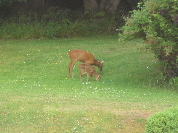 Mother and Baby deer. by benjones94