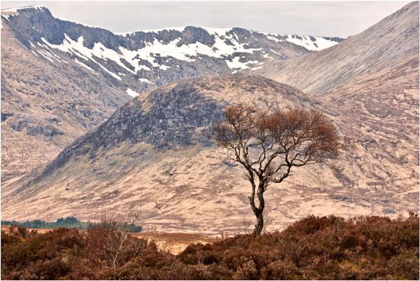Rowan Tree... by Scottishlandscapes