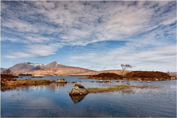 The Same Tree... by Scottishlandscapes