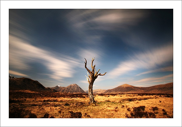 The Lonely Tree by edwood