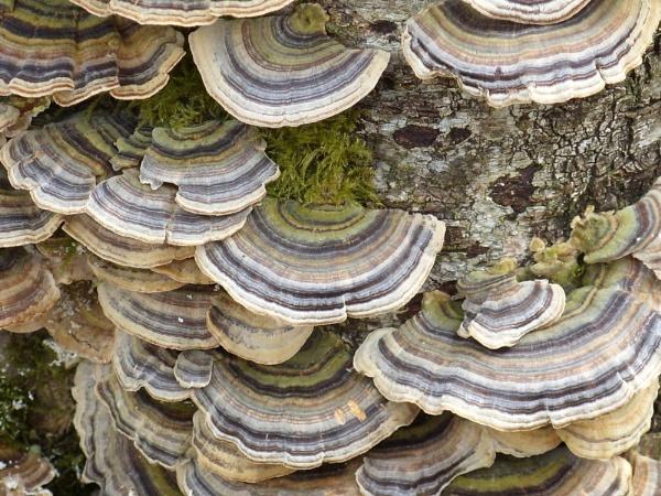 Fungi on tree stump by fridge2195