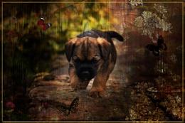 curious pup..