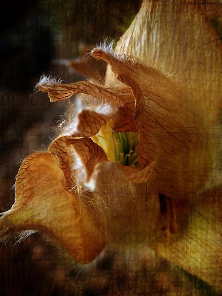 ~ peeking ~ by janecurrie