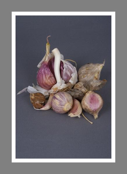 Allium sativum by Sonic63