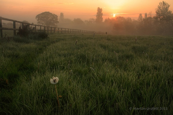 Dandelion Sunrise by 4orty7even