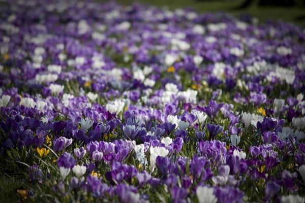 Carpet of Flowers by Lexxy