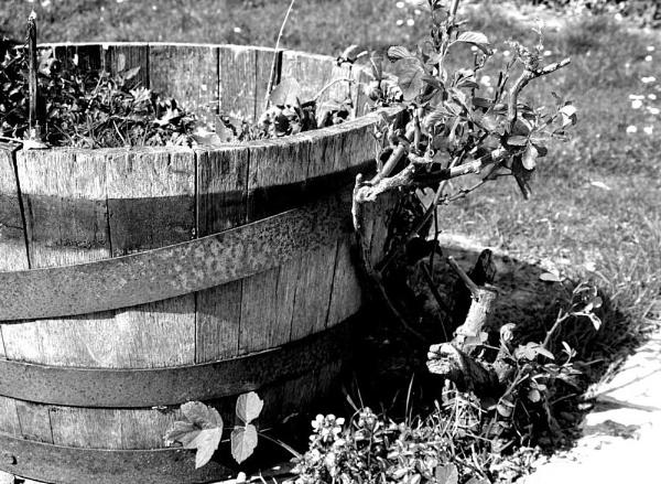 Old Barrel by jessikerr