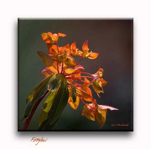 Fireglow by LizMutimer