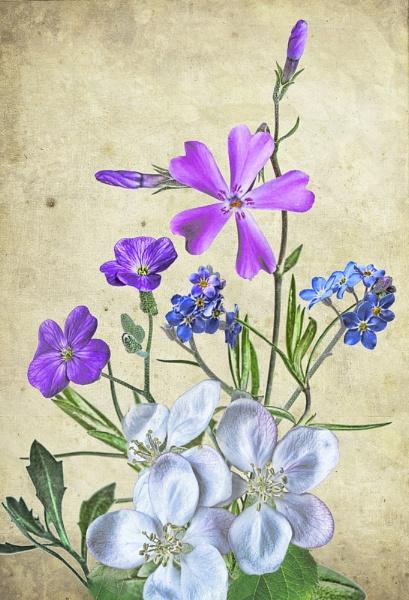 spring flowers by dentex