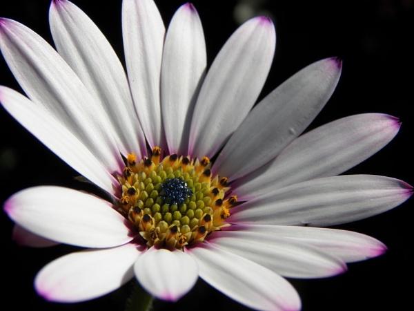 Macro Flower by joshwa