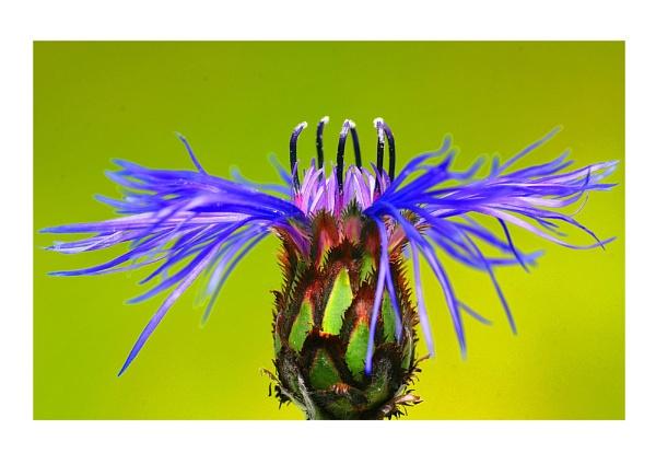 Spider legs by KENZIEBOY