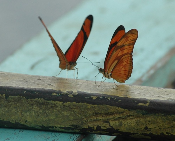 Butterflies on the Amazon by Vik16