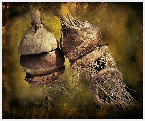 Bulbs by bricurtis