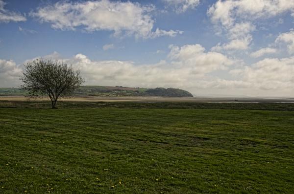 Estuary Tree by royd63uk