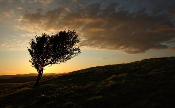 Sunset Tree by jonlonbla