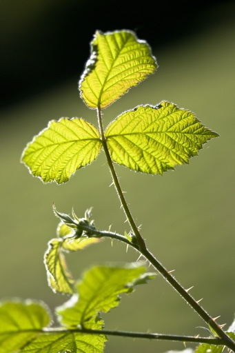 Leaf by Moey