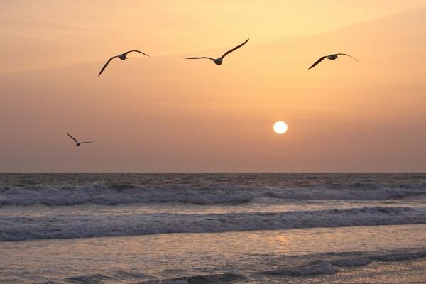 Sunset flights by paulvo