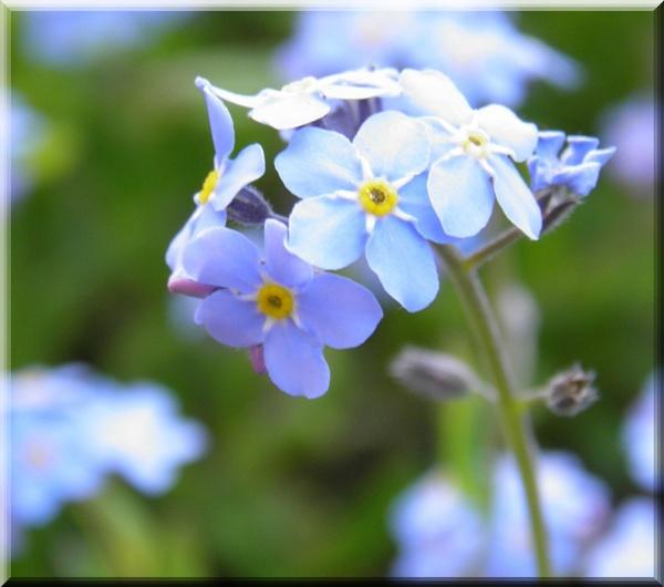 Blue by brightspark