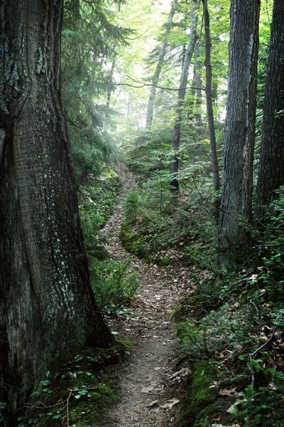 enchanted path by Apri1